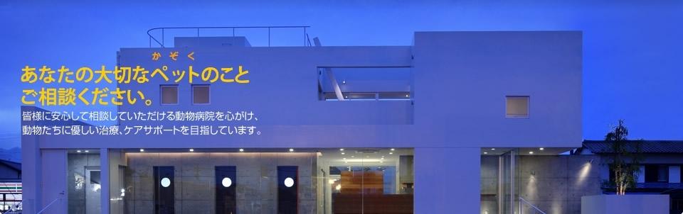 いるか動物病院 |静岡県静岡市駿河区みずほ