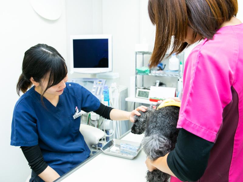 動物のための治療