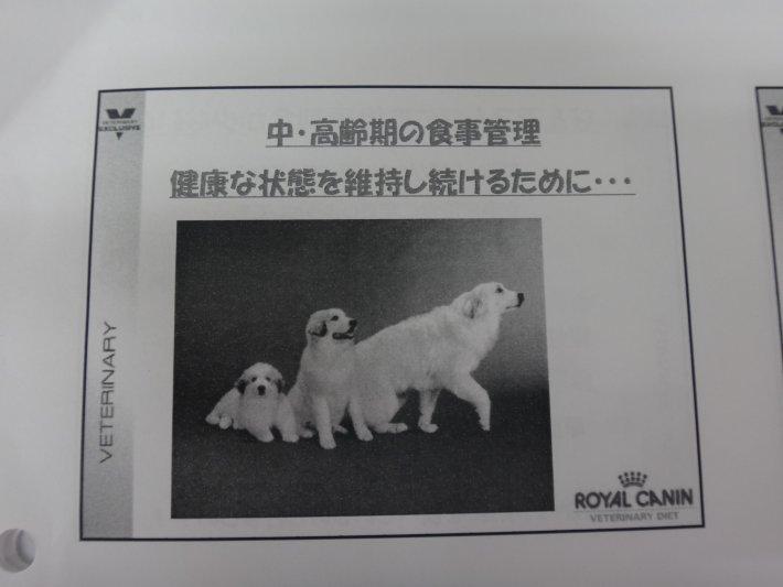 DSC03603[1]